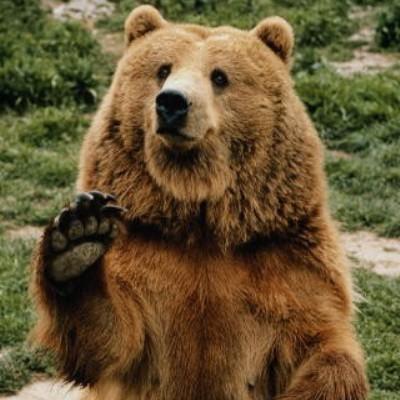 Скачать новости про медведей и марихуаны когда марихуана выйдет